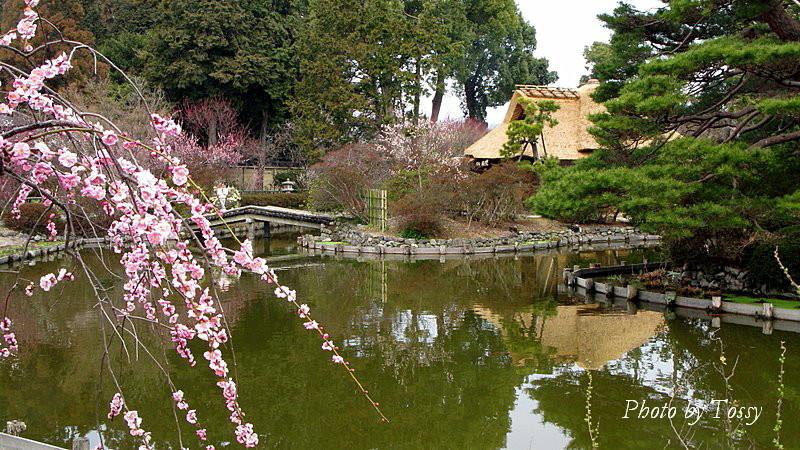 神苑 茶室「池中亭」