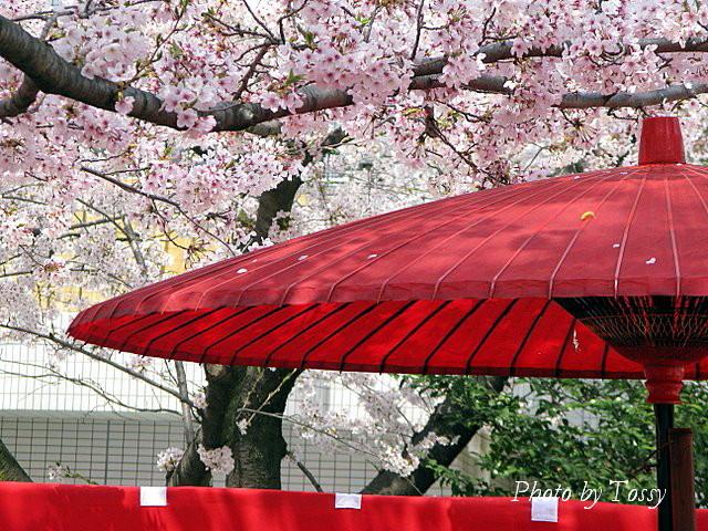 さくらと赤い傘