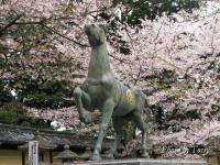 桜の仲の馬
