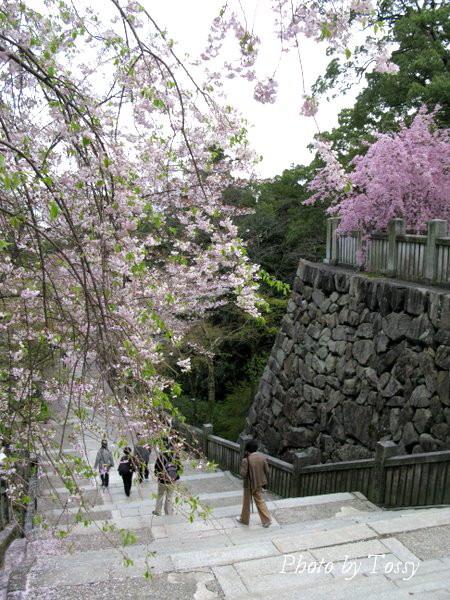 桜吹雪のの石段