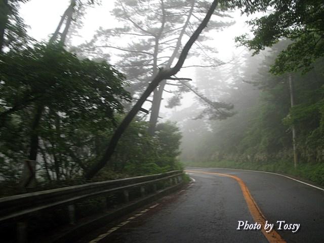 霧のドライブウエイ