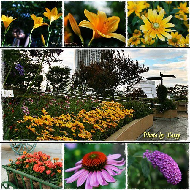 ナンバパークスの花