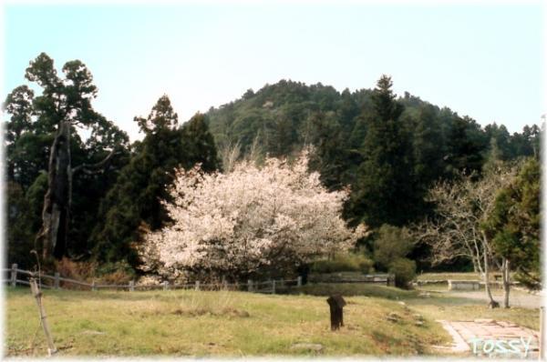 史跡公園1