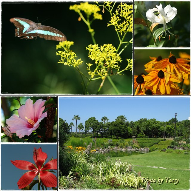 臨海公園の花