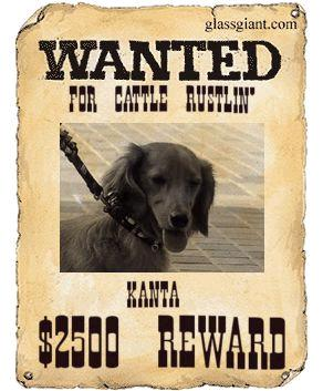 wanted3