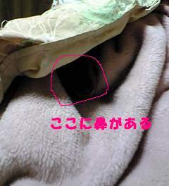 20070621012015.jpg