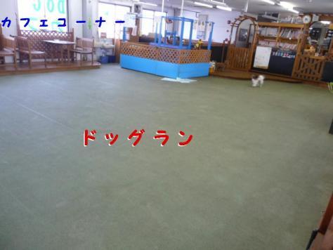 コピー ~ P1080727