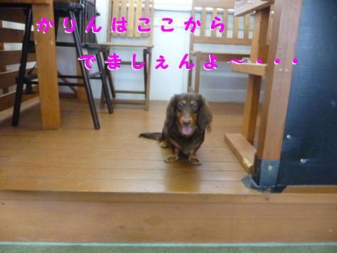 コピー ~ P1080732