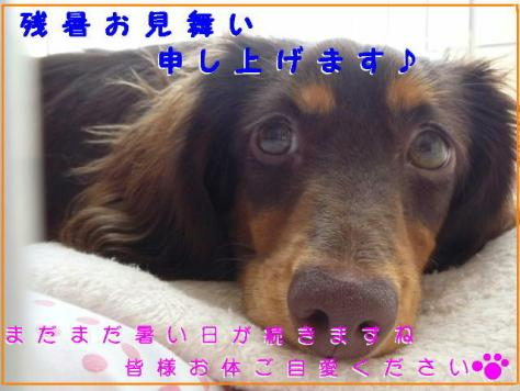 コピー ~ P1080598