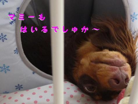 コピー ~ P1080898