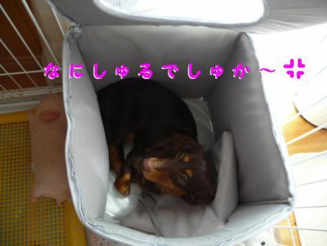 コピー ~ P1080922