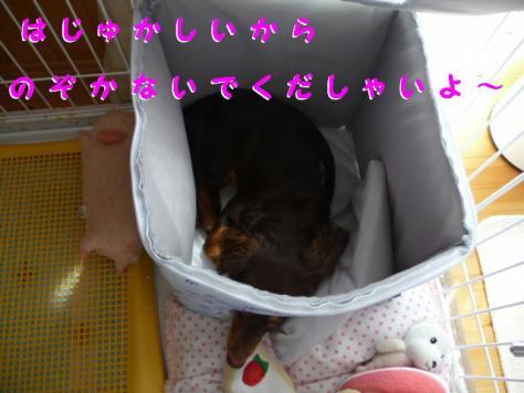 コピー ~ P1080923