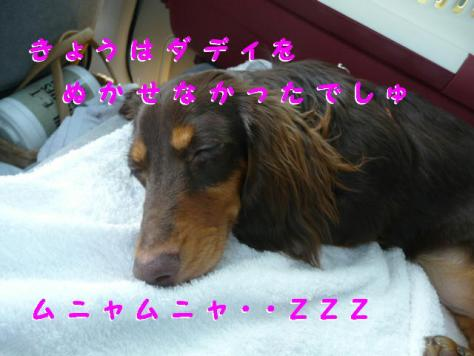 コピー ~ P1090141