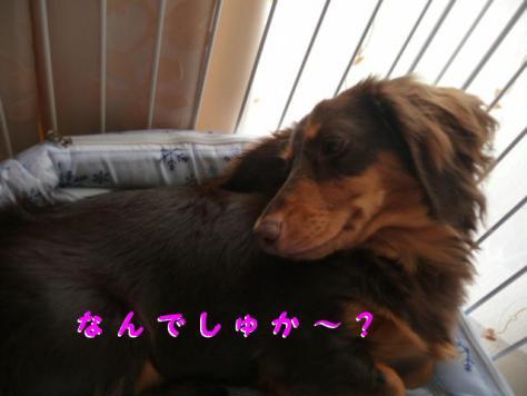 コピー ~ P1090780