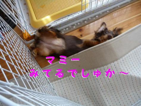 コピー ~ P1100145