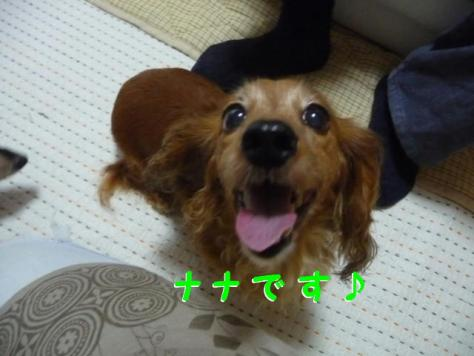 コピー ~ P1100319