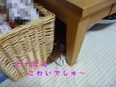 コピー ~ P1100321