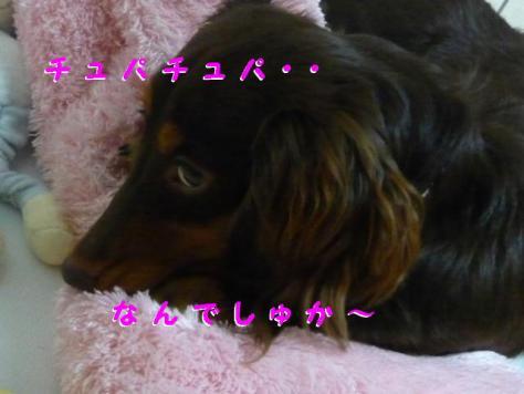 コピー ~ P1100376