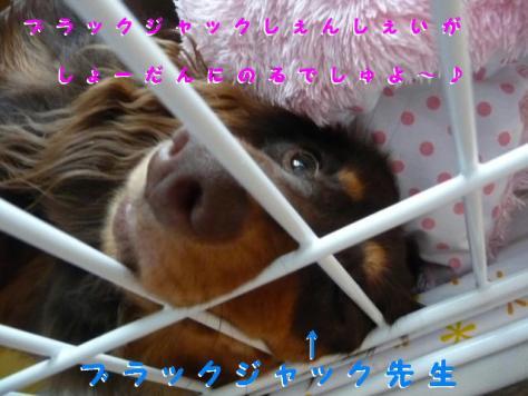 コピー ~ P1100659