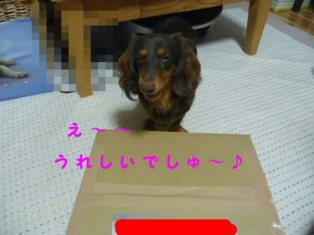 コピー ~ P1110669