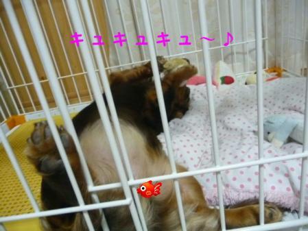 コピー ~ P1110688