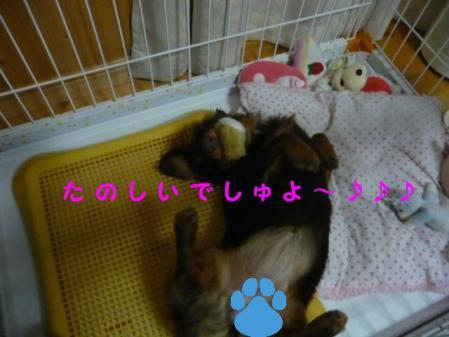 コピー ~ P1110689