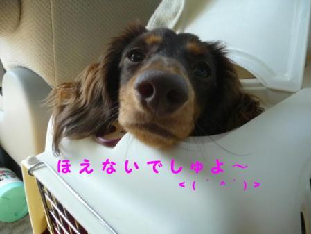 コピー ~ P1110843