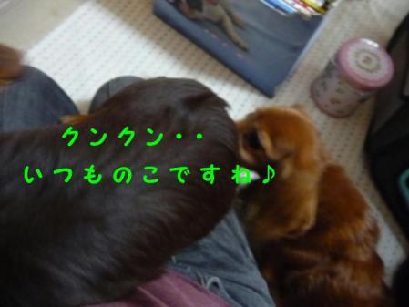 コピー ~ P1120119
