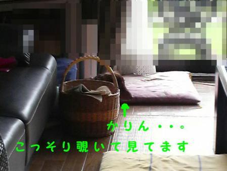 コピー ~ P1000448