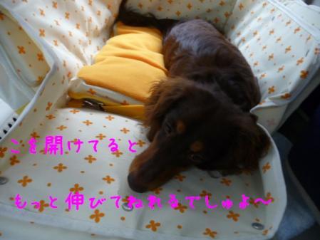 コピー ~ P1130406