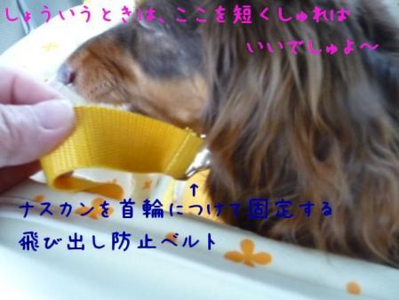 コピー ~ P1130412
