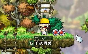 Maple0000011.jpg