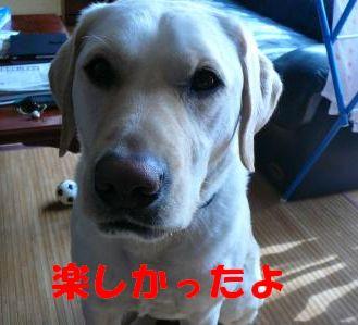 P1030006_convert_20120405170354.jpg