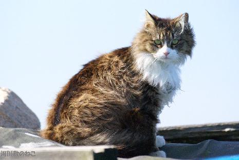 猫アスレチック