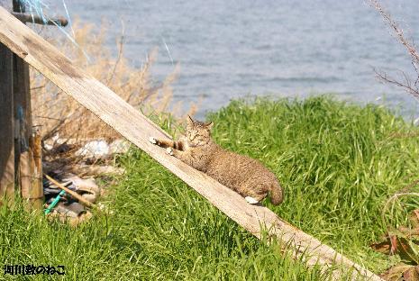 猫アスレチック2