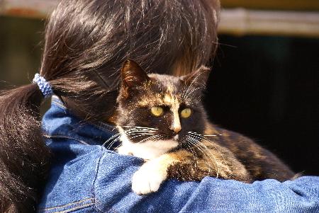 おーしゃん家猫