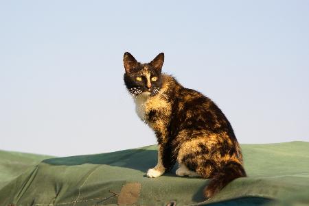 おーしゃん家猫5