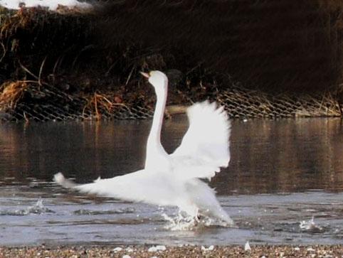 2008_020508年2月3日2水上公園0018