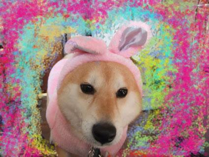 かわいいしば犬