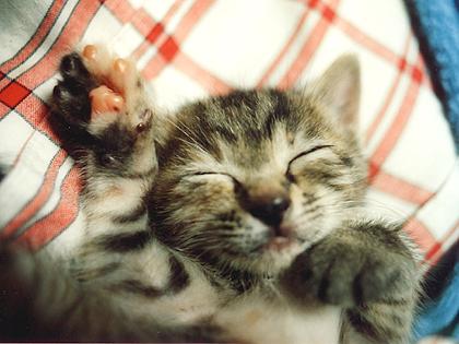 可愛い寝顔とツヤツヤの肉球