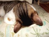 2009・7/28「蜜柑の寝姿」より