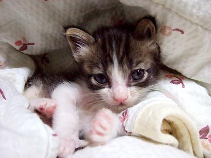 つっぱしる猫の主人公