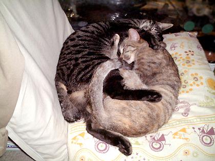 絡み合って寝る ねぎとダヤン(左から)