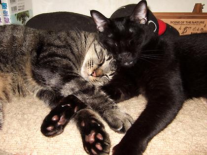 顔を寄せ合って寝る はちとバジル(左から)