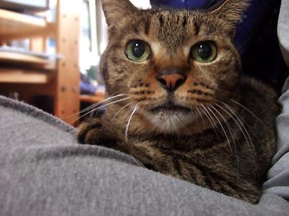 やっと撮れた膝の上のルナの顔
