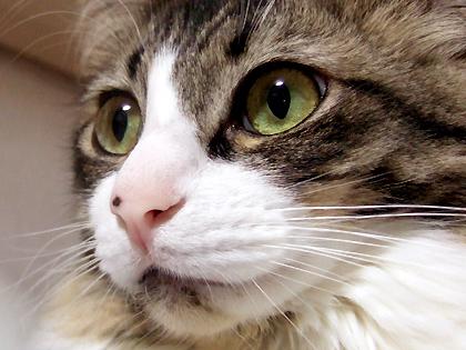 目鼻立ちはっきりの美しいにぼち