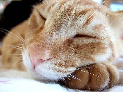 寝顔と前脚が可愛すぎなトー