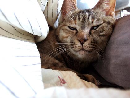 かなりの寝ぼけ顔
