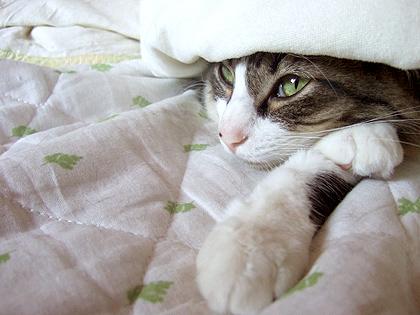 布団の中では、いつも一人寝が好きなにぼち