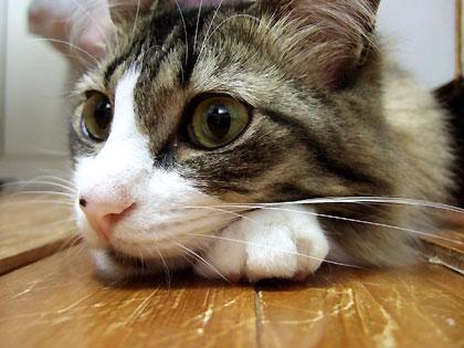 「つっぱしる猫、、まだかしらねぇ、、」